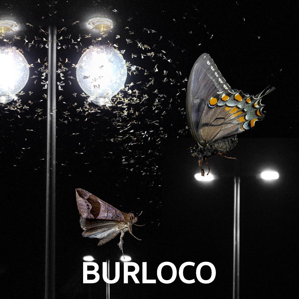BURLOCO Papillon